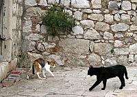Кошки и Котята 68