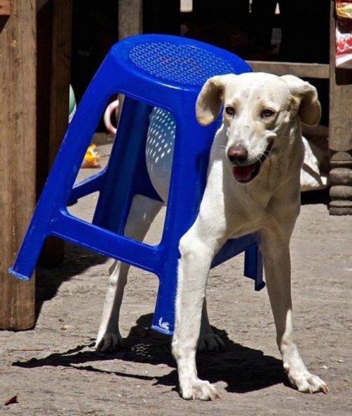 Смешные животные, застрявшие в самых неожиданных позах и ситуациях (22 фото)