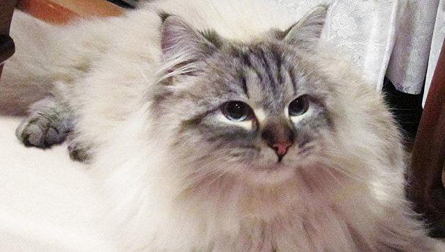 Японский губернатор рассказал, что привязался к подаренному Путиным коту