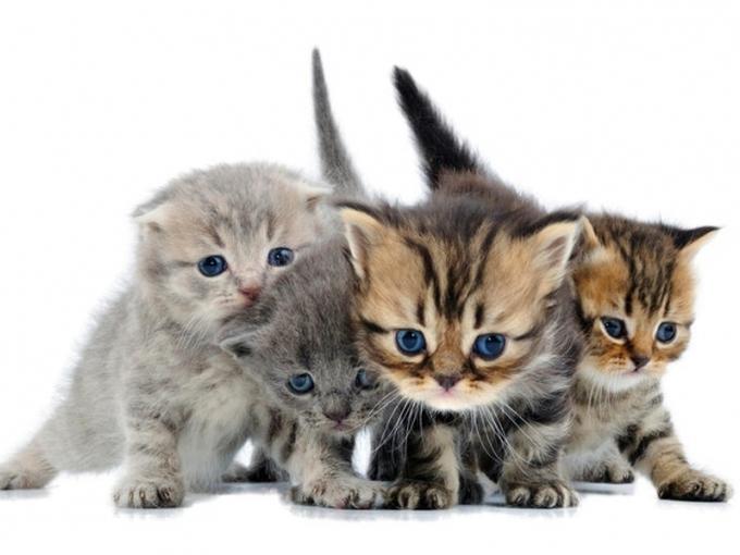 Как выбрать котенка: 6 фактов, которые нужно учесть