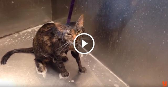 Кот просит больше не лить на него воду