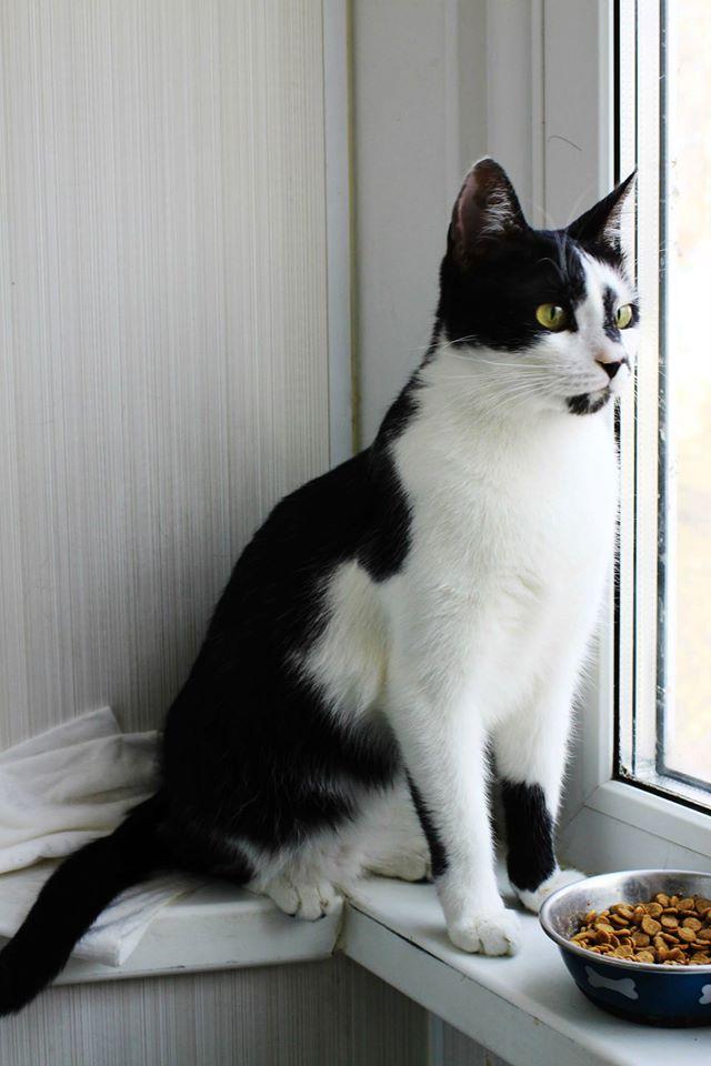 Эксклюзивному котику Портосу срочно нужен дом