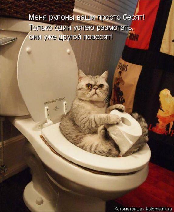 Котейки, псы и все-все-все в котоматрице, собранной от души