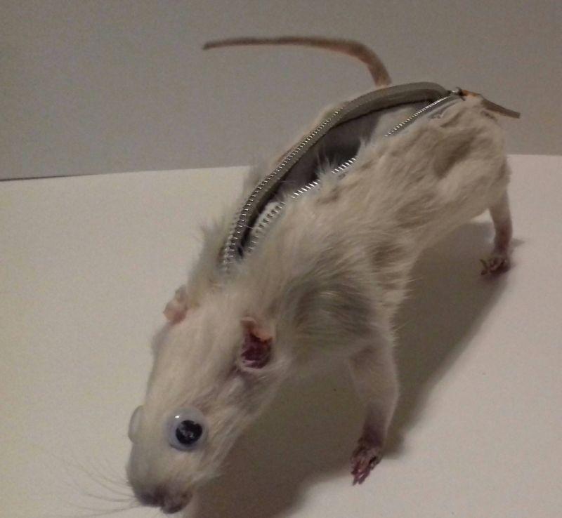 Пенал для карандашей из крысы с точилкой в заду