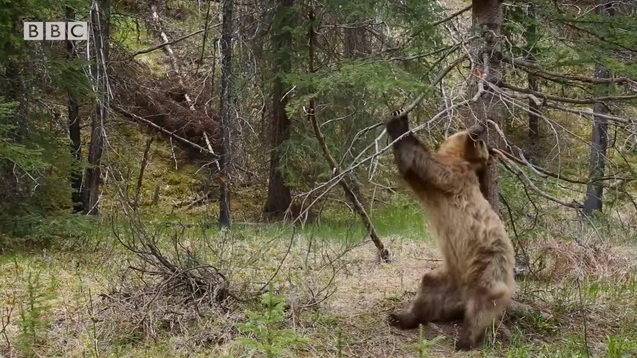 Да этому медведю можно в клубе выступать! ;)