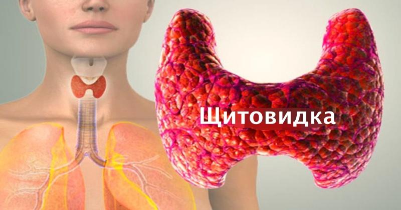 Как привести в порядок щитовидку