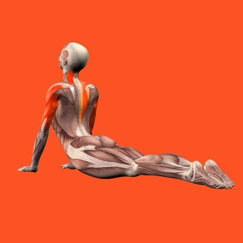 Упражнение «Ползущая спина» для гибкости и подвижности позвоночника