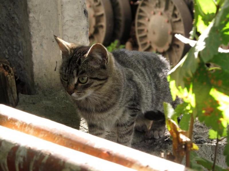 Надежные тылы. бронетехника, животные, коты