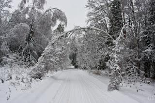 Три похода в лес зимой с ночёвкой в чуме