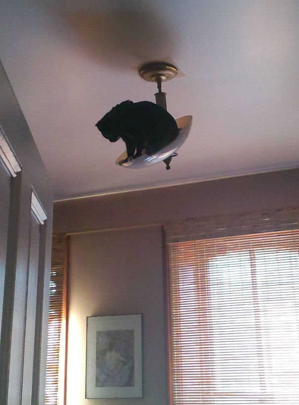смешные коты, коты пожалели о своём решении