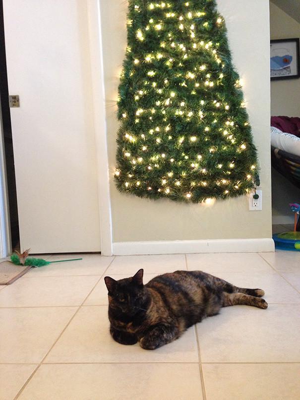 Если в доме живет кот  елка, животные, защита