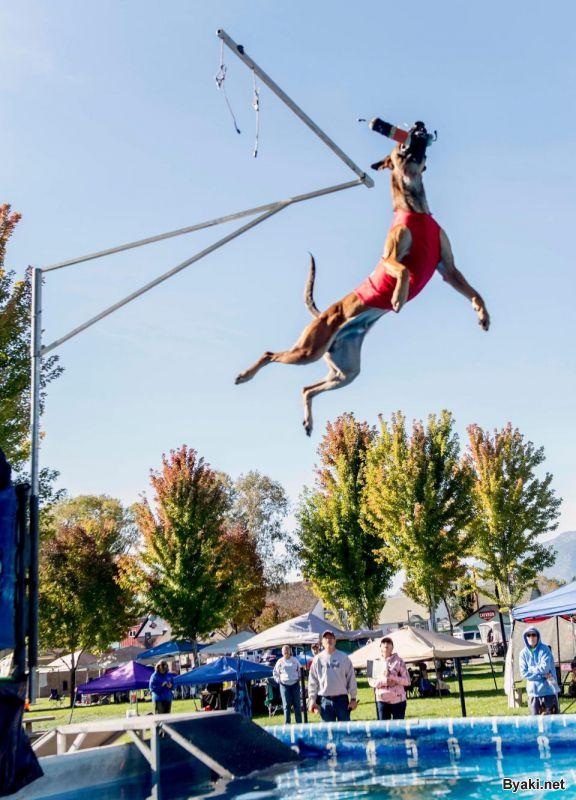 Соревнование по прыжкам среди собак в Неваде
