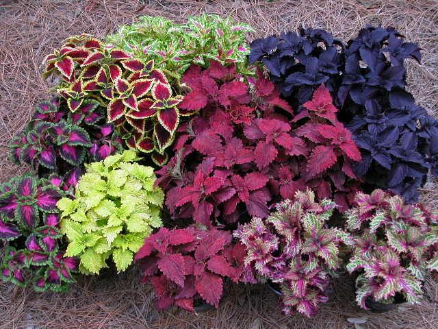 Какие цветы выбрать для озеленения балкона – полезные советы