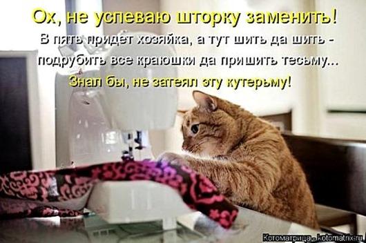 1495826305_kotomatricy-3