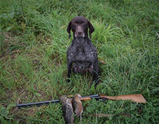 Ходовая охота с собакой