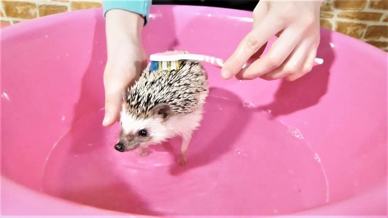 Самые Милые Видео с Животными