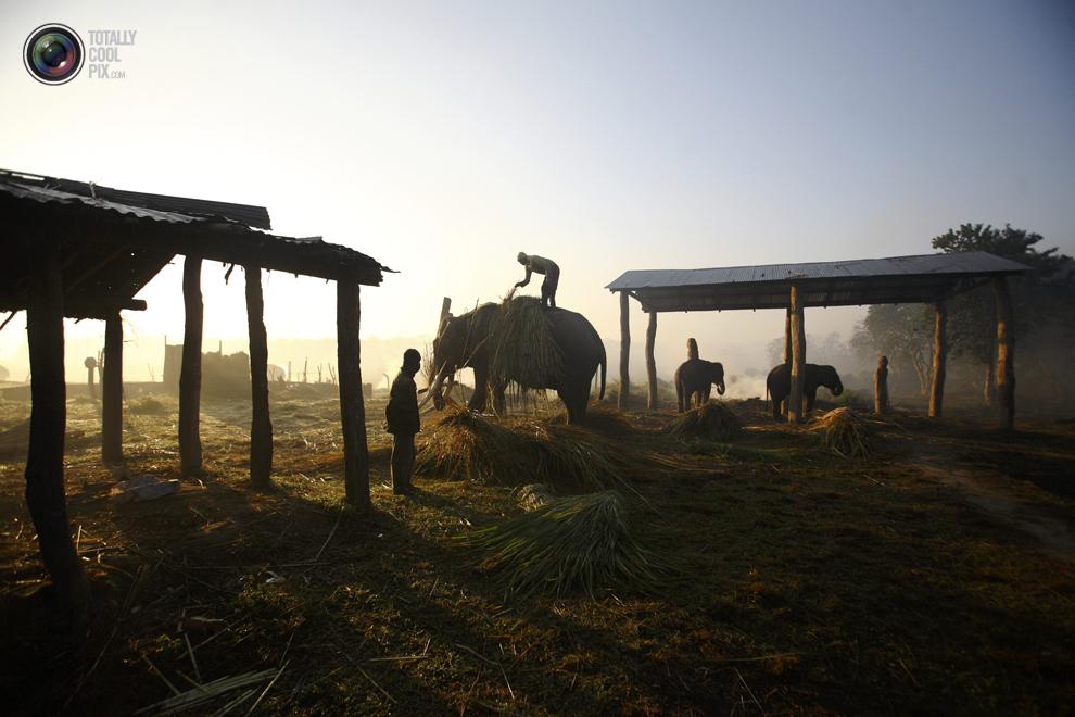 elephants 002 Слоны в национальном парке Читван