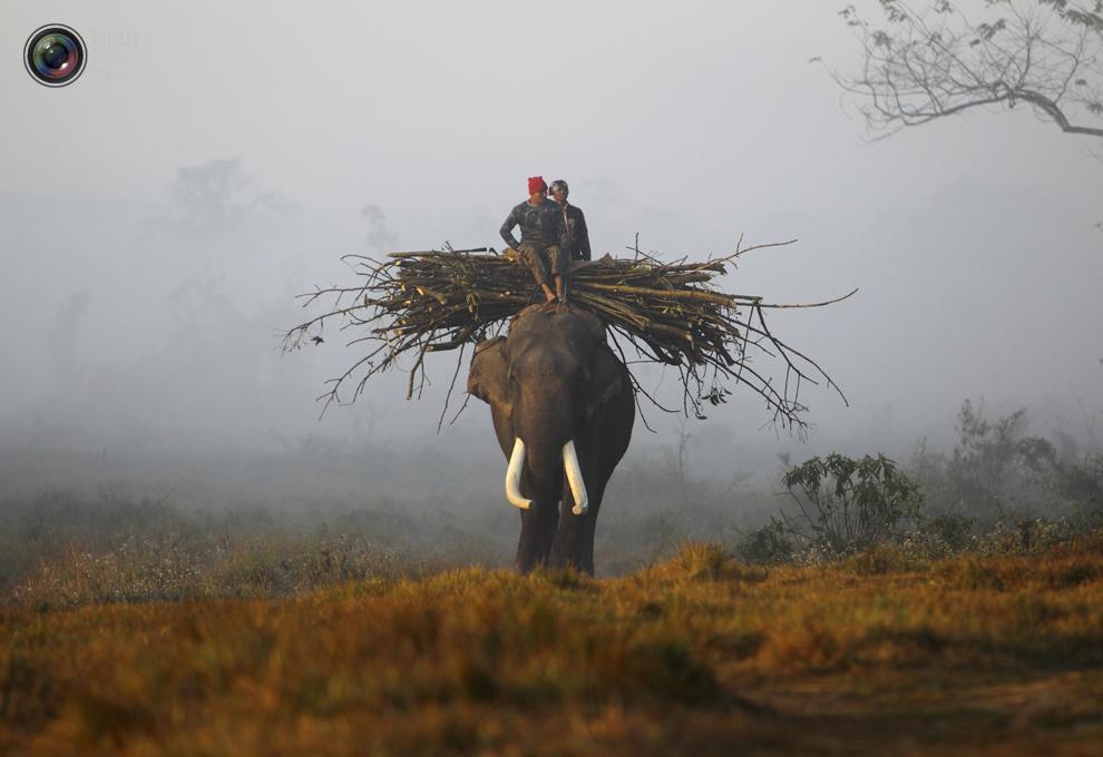 elephants 004 Слоны в национальном парке Читван