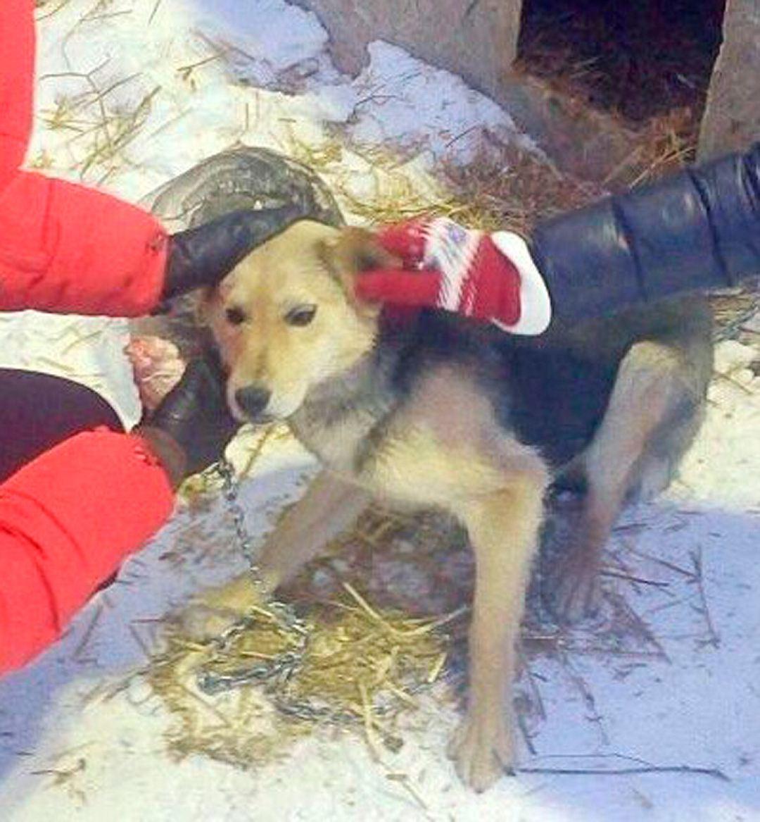 Узница деревенского собачьего концлагеря обзавелась коттеджем в Германии