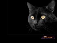 Кошки и Котята 3