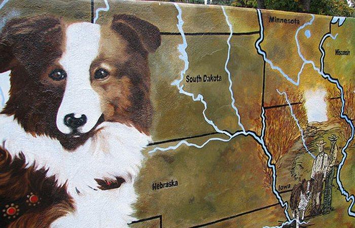 Невероятное возвращение Бобби: история колли, который прошёл более 4000 километров, чтобы добраться домой