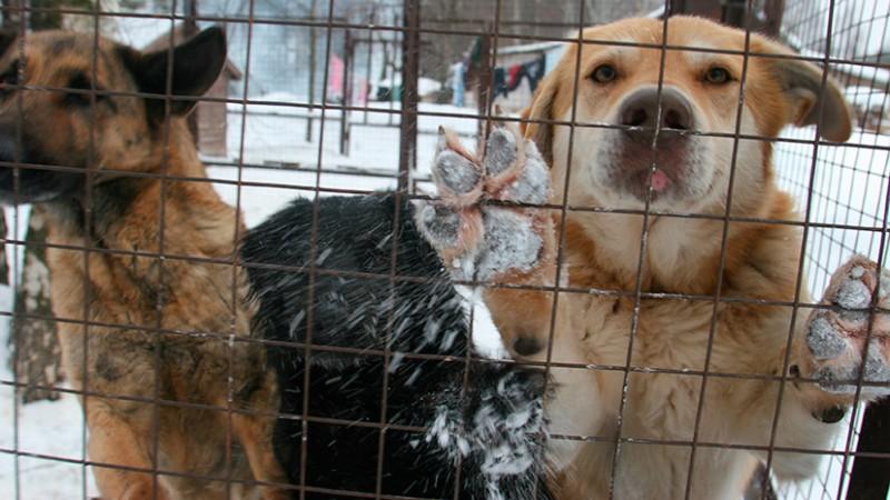 В Госдуме подготовили поправки в законопроект об обращении с животными