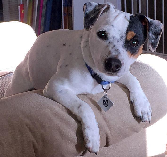 Собака долго упрашивала хозяина выйти на балкон… Она знала, что там лежит малышка, которую нужно вернуть к жизни