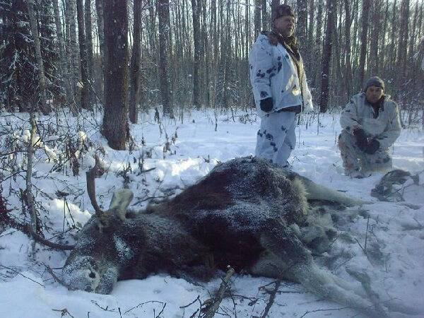 Охота на копытных
