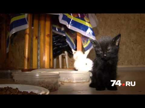 Работники челябинского рынка выбросили в сумках 36 котят. Быть беде, если б не эта женщина