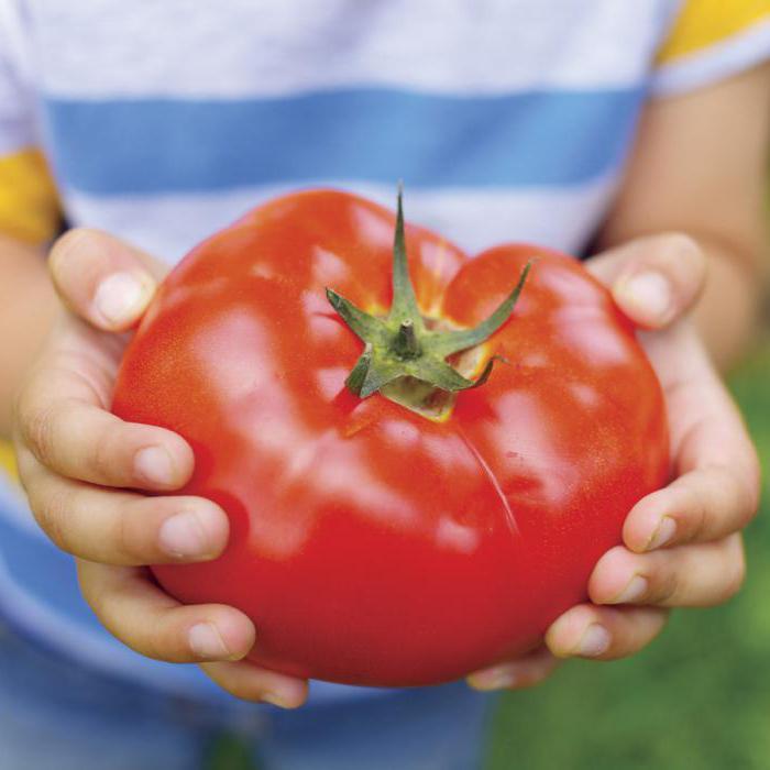 Самые крупные сорта томатов. Экземпляры до 4 кг