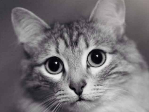 В Перми продают «кота-целителя» за два миллиона рублей