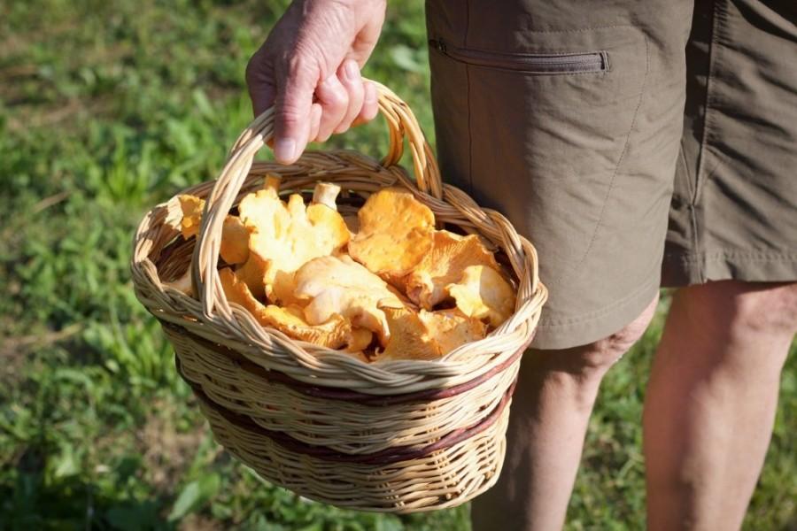 От рака и диабета: Названа оптимальная для здоровья порция грибов