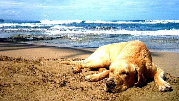 Молодая мама попросила убрать с пляжа собаку. И пожалела.