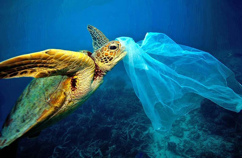 К 2050 году в океанах будет больше пластмассы, чем рыбы: прогноз