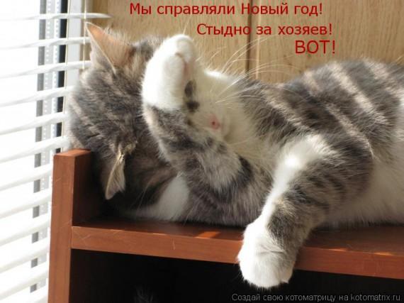 Новый Год и коты
