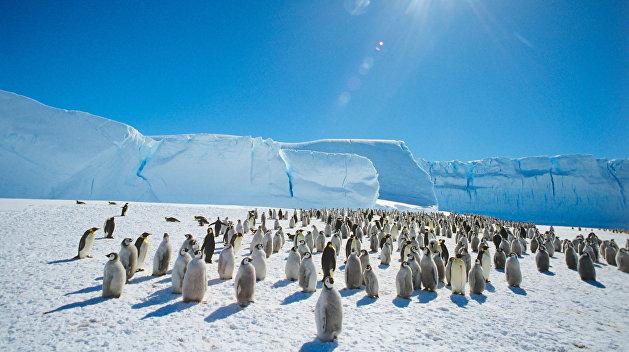 Украина начала борьбу за Антарктиду