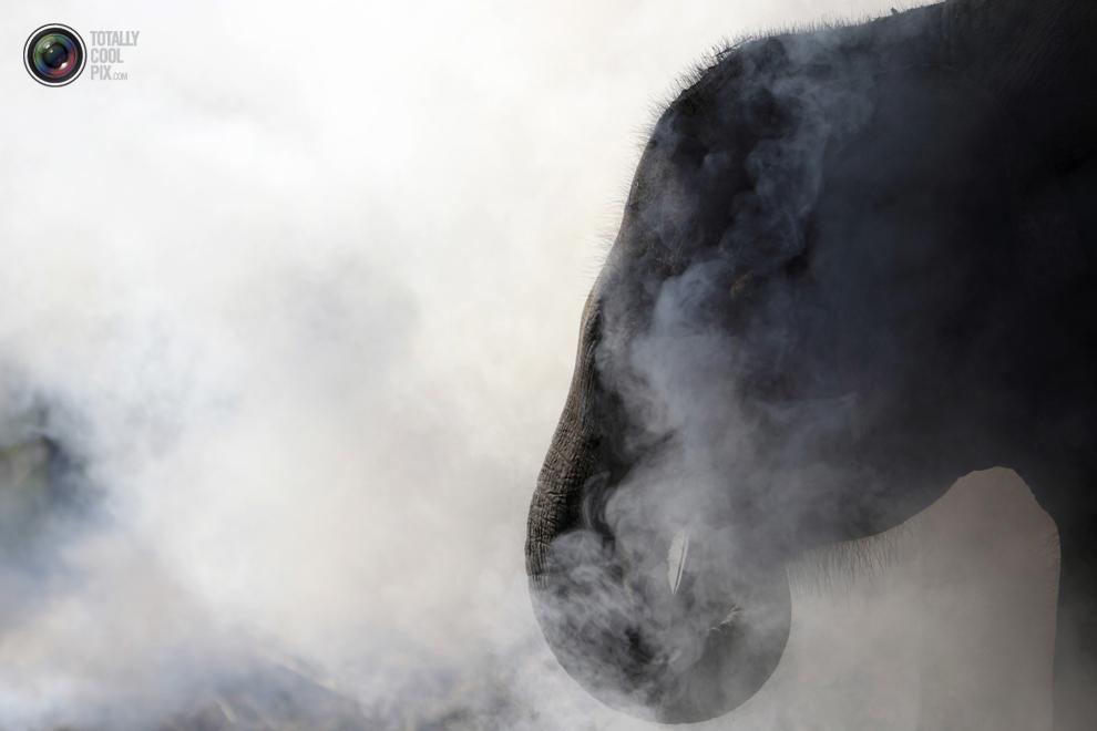 elephants 018 Слоны в национальном парке Читван