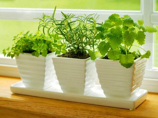 Как вырастить свежую зелень в домашних условиях
