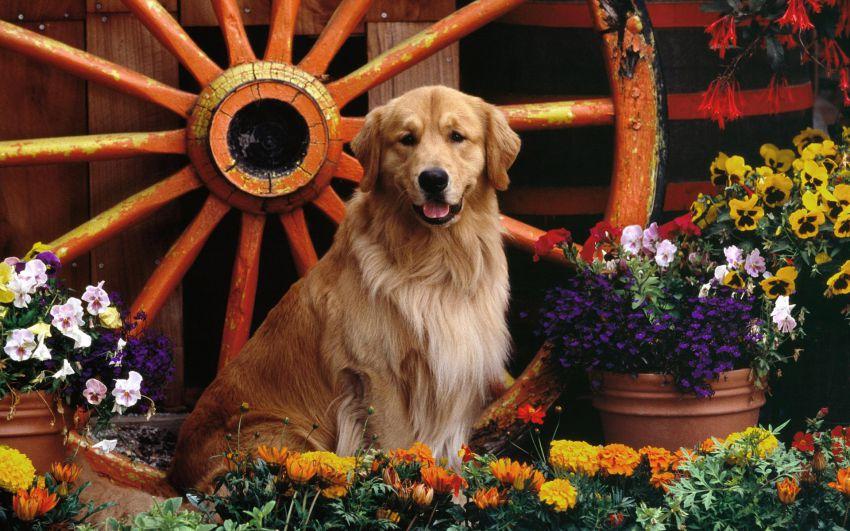 Интересные факты из жизни собак  животные, собака, жизнь, интересное