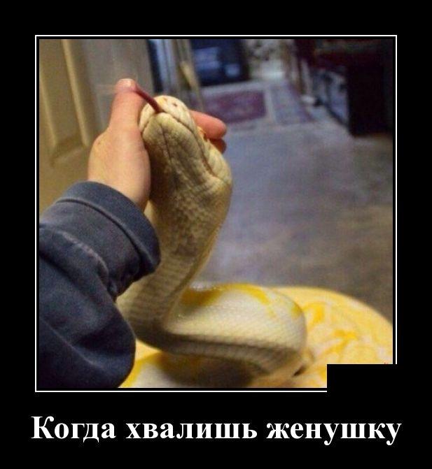Обувь может многое рассказать о человеке. Если обувь тычится вам в бока и в лицо, то её хозяин чем-то крайне взволнован, например  ...))