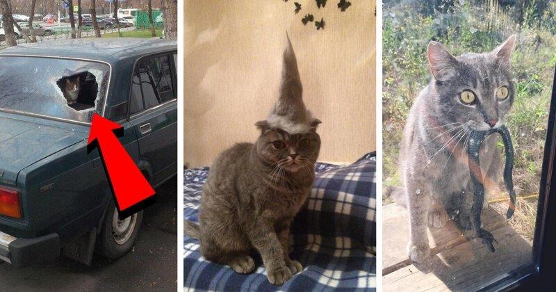 20 причин, по которым котов лучше не злить!