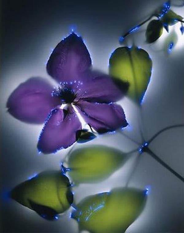 Растения и электричество
