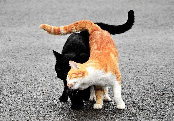 18 кошек доказывающих, что любить может каждый