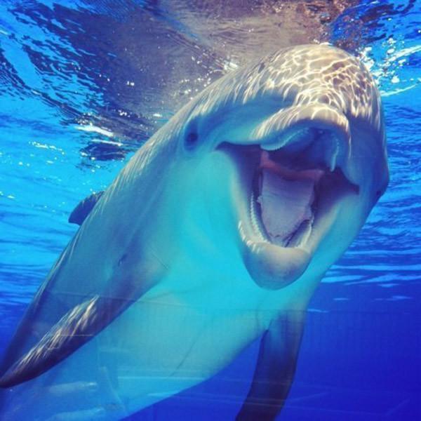 Дельфины особого назначения