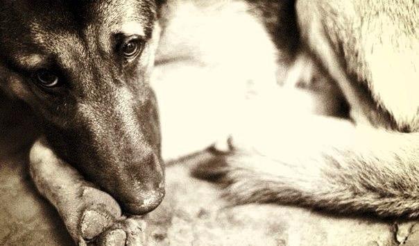 Жалейте бездомных животных, Они ведь хотят тоже жить