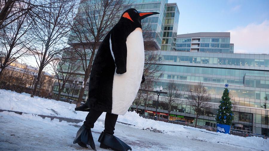 Пингвина я узнаю по походке