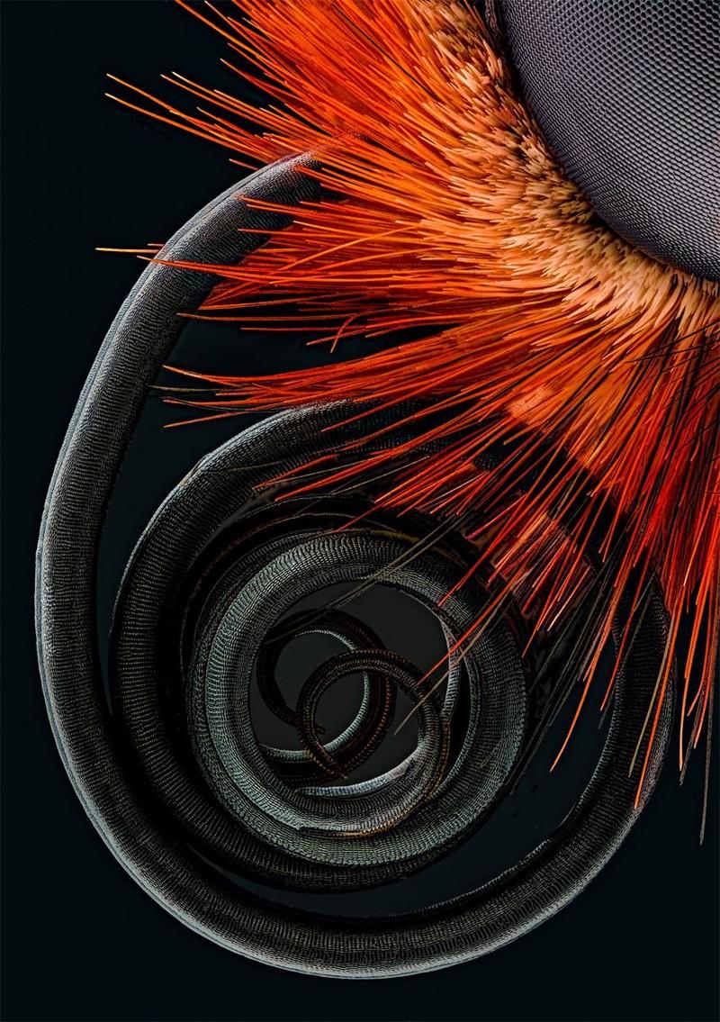 1. Четвертое место: хоботок бабочки nikon, конкурс, красота, фото