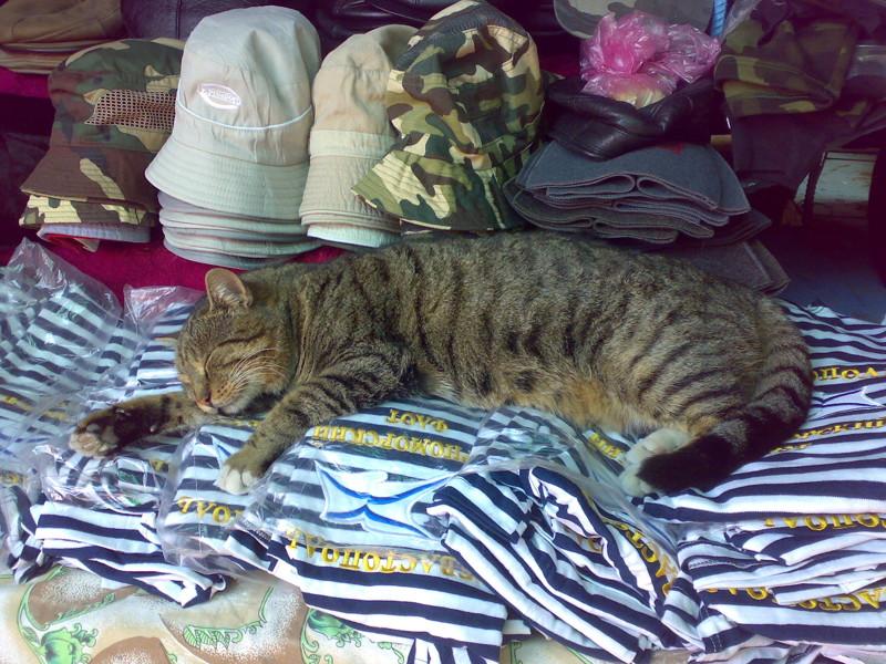 Продавец сувениров балаклава, интересное, коты, юмор