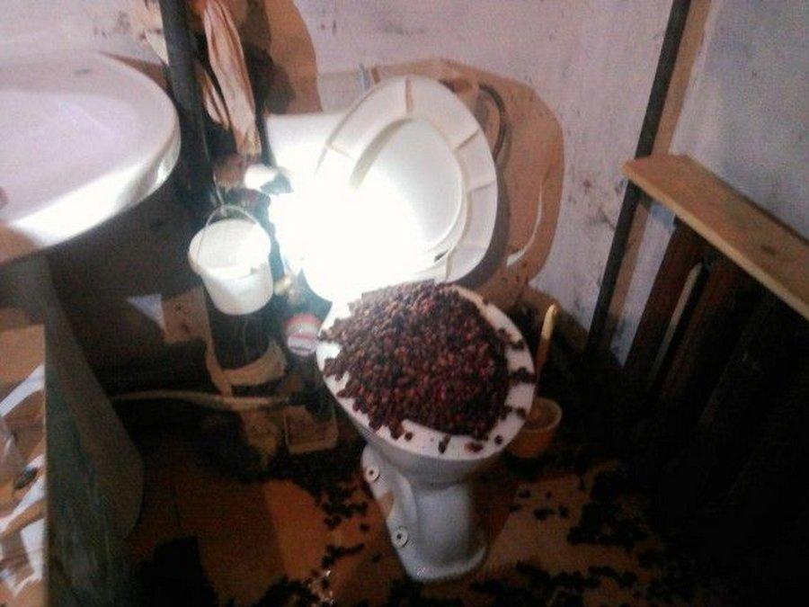 Необычная проблема — фонтан из шиповника в туалете