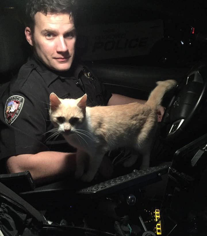 В поисках своего человека некоторые коты проявляют чудеса наглости и бесстрашия
